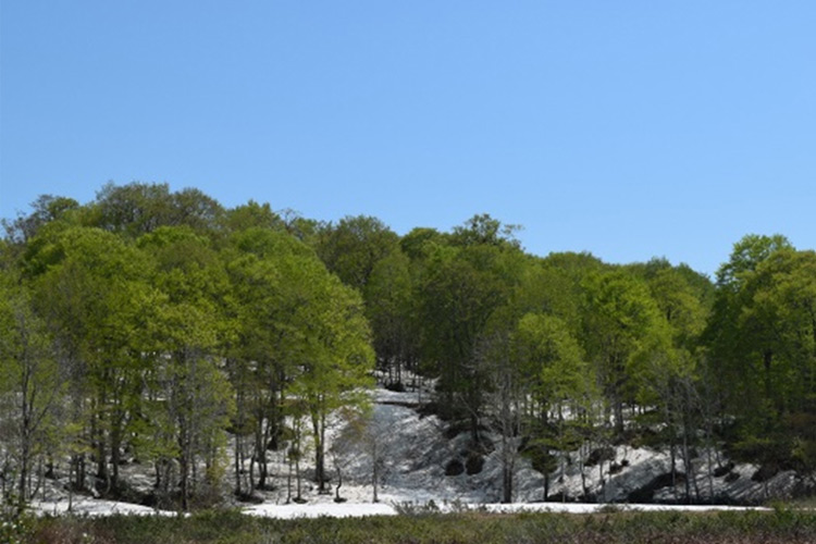 残雪と新緑これから山頂にもどんどん春が!!