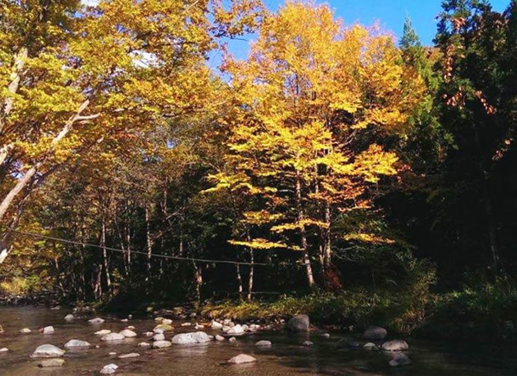 校舎の裏を流れる渓流には中滝名物の滝