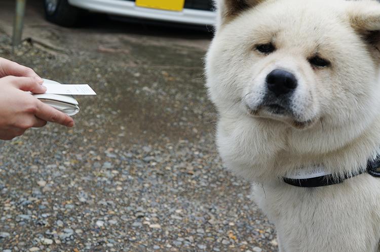 とある秋田犬のムック