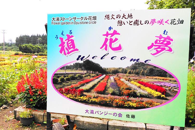 ウェルカム(植花夢)!秋田県鹿角市にある気軽に入れる花いっぱいのお花畑が凄く綺麗!