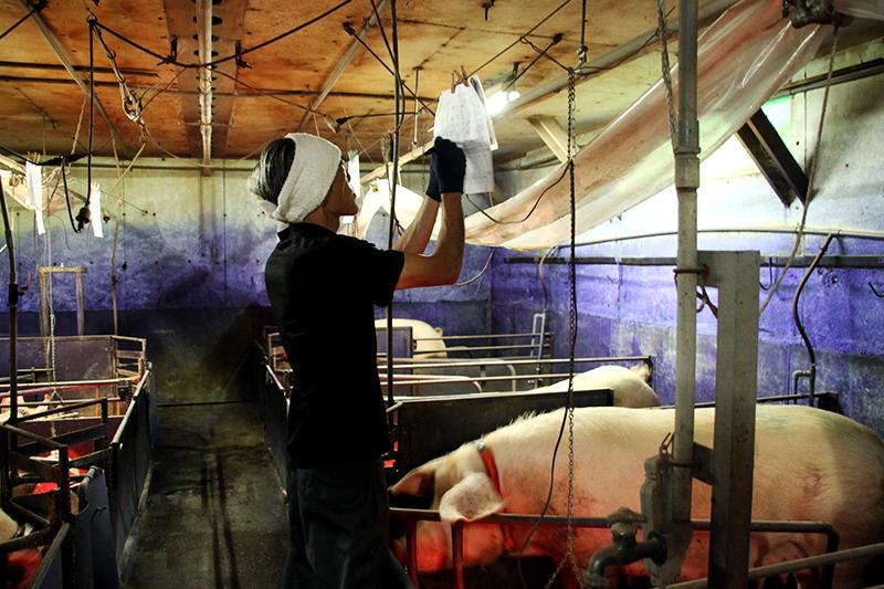 農事組合法人 八幡平養豚組合求人情報『みんなの喜びを生み出す!鹿角を代表する養豚農場』
