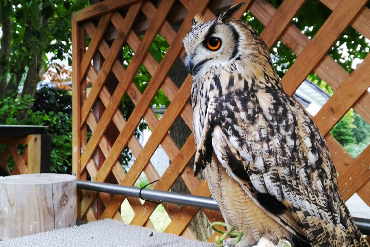 秋田でも珍しい!フクロウと小鳥にふれあえる小坂町のお店TORIKAGOに行ってきた!