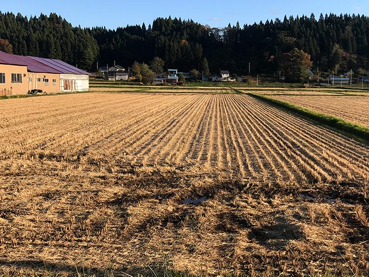 サイクリングコース 稲刈り後の田んぼ
