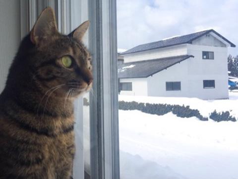 雪を眺める猫