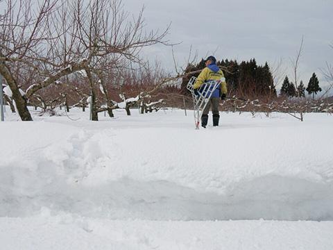 雪深い果樹園