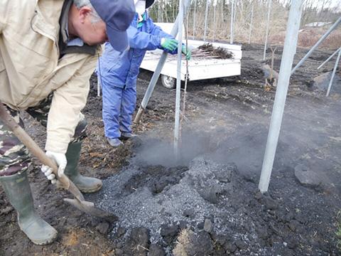 穴に肥料を入れる作業