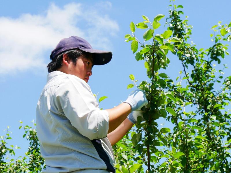 作業を手伝う果樹センターの方