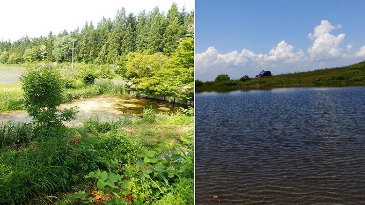 下川原のトゲウオ 上沼のモリアオガエル