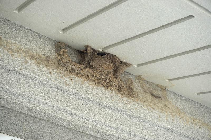 道の駅かづのあんとらあ ツバメの巣